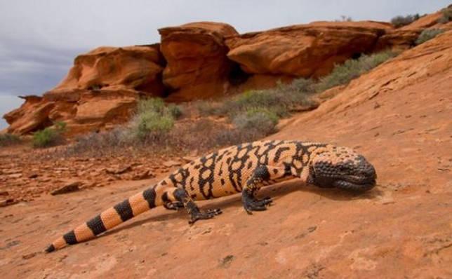 Какие животные обитают в Северной Америки — список видов, фото и характеристика