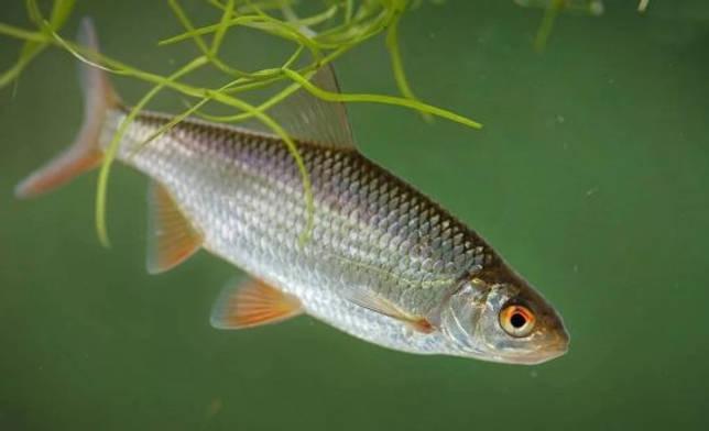 Промысловые виды рыб: названия, фото и характеристика