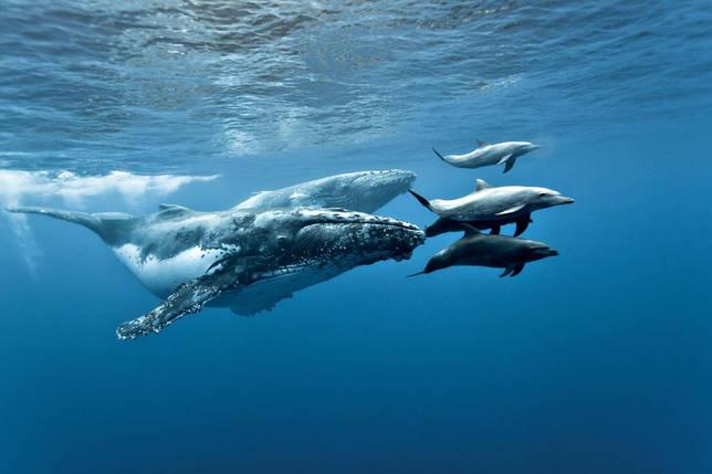 кит и дельфины