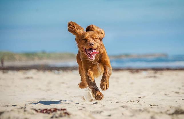 С какой скоростью бегает собака?