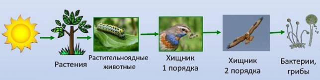 Травоядные, или растительноядные животные: особенности, список, виды и фото