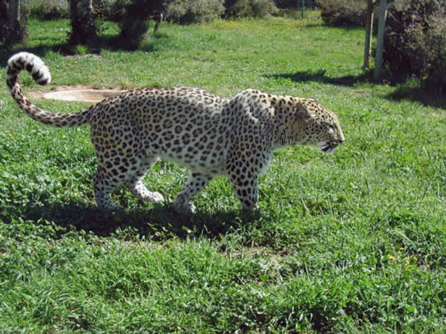 Животный мир Кавказа - список, характеристика и фото 12