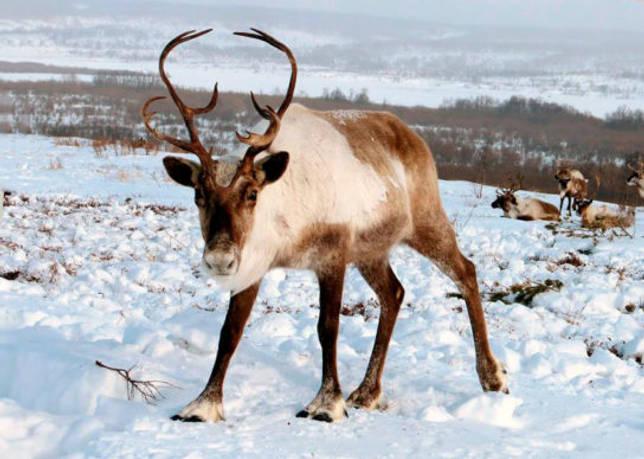 Животный мир Свердловской области — список, характеристика и фото
