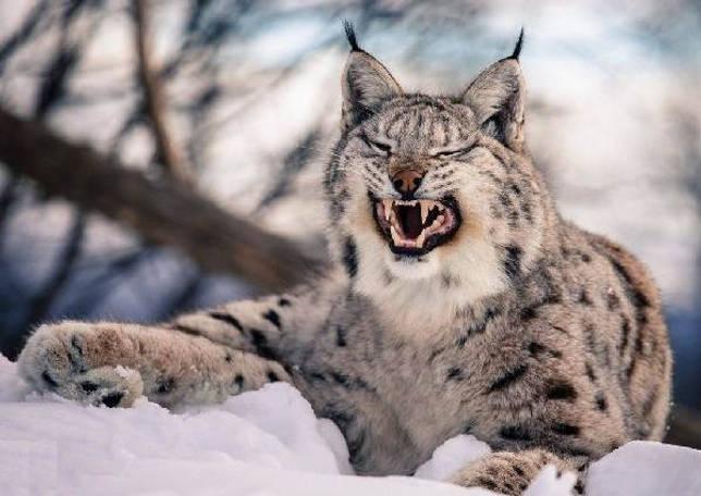 Животные-Урала-Описание-названия-и-виды-животных-Урала-9