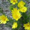 Какие растения растут в степной зоне — названия, фото и характеристика
