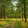 Лесное природное сообщество: особенности, значение для человека, флора и фауна