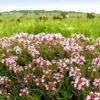 Растительный мир Крыма: названия, фото и характеристика